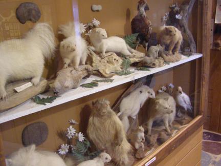 1) Spirit of the Woods Museum, Williamsburg