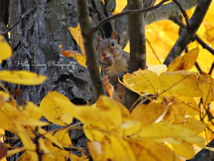 16. Haley Fredericks managed to  to capture a quintessential fall shot of this squirrel getting ready for winter in Bedford.