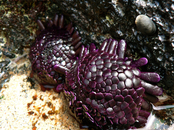 5) These mysterious beach creatures found near Keoneoio look like they could be from another planet – or universe.