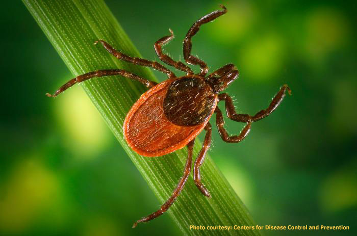 16. Anyone who's hiked Virginia's woods and countryside knows that ticks are a real and present danger.
