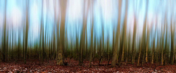 13. Ordinary trees in Floyd take on a surreal effect with the artistry of Donnie Nunley.
