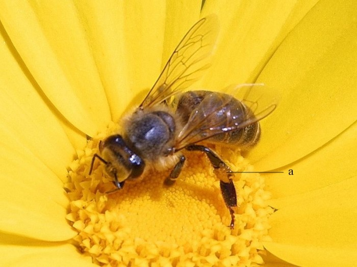 3. Bee