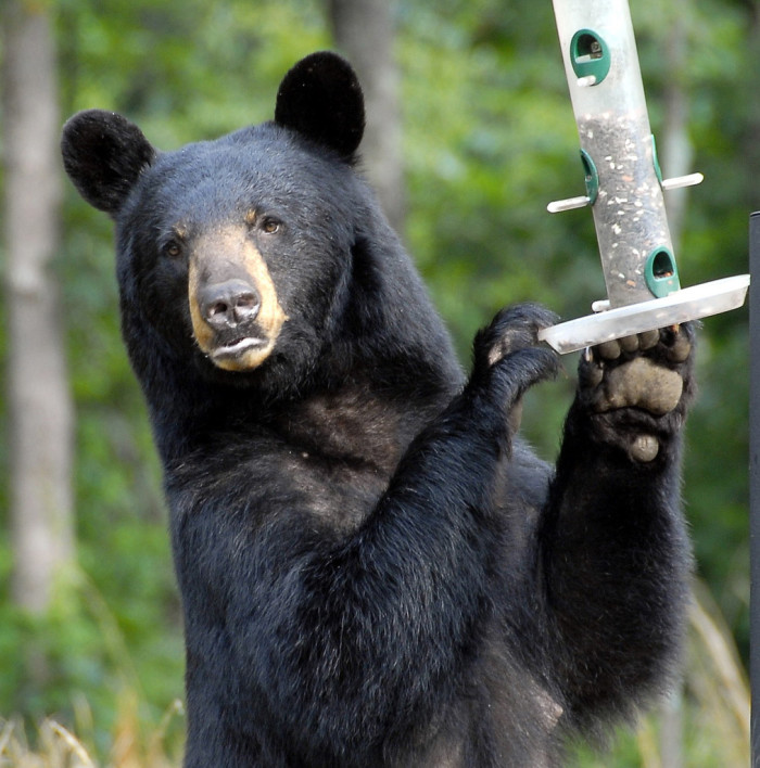 2. BEARS.  He's got the birdfeeder! You know what that means, don't you?