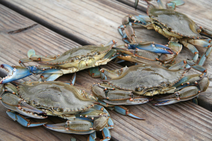5. Catch, cook and eat fresh blue crabs.