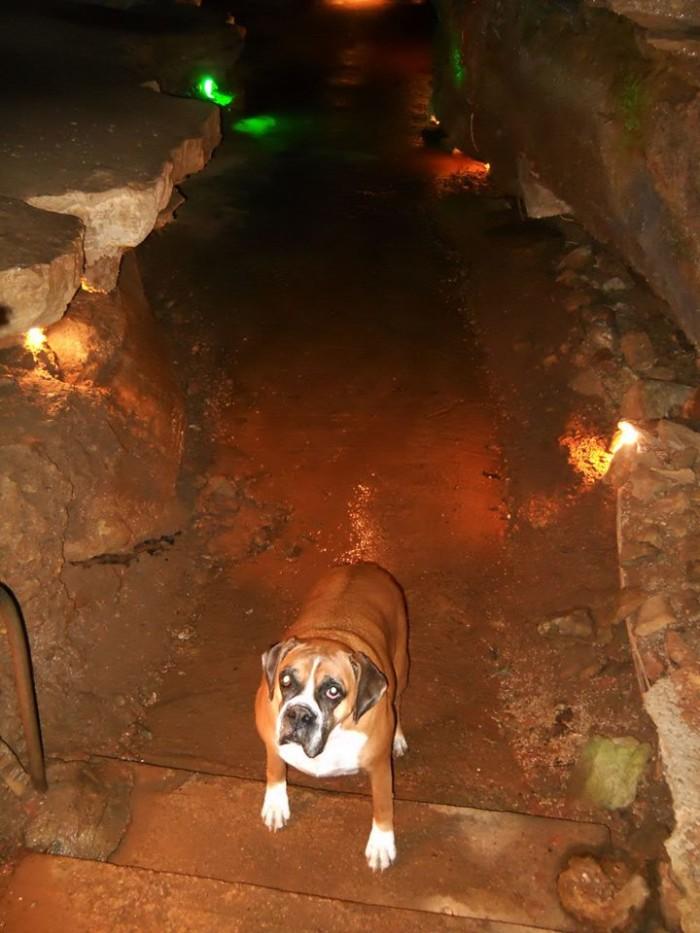 10. Bull Shoals Caverns