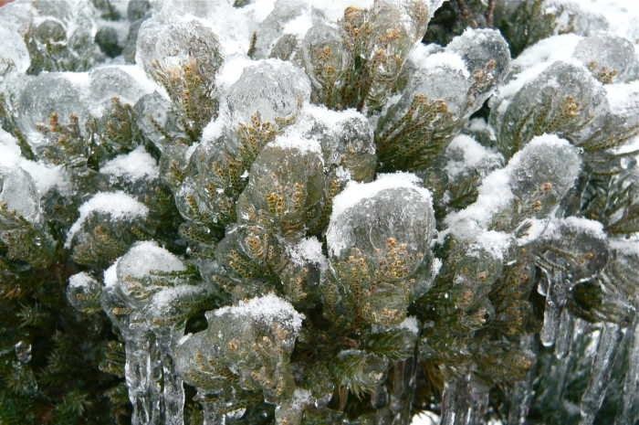 7. Evergreen In Ice