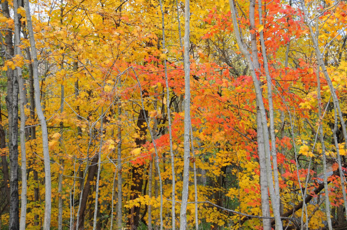 10. Trees with fall foliage like these.