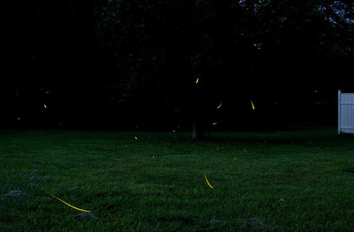 3. Fields of fireflies