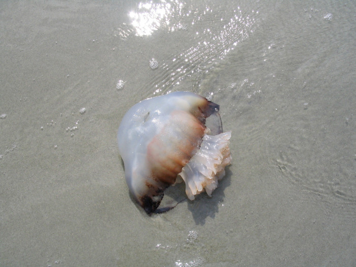13. Ever been stung by a jellyfish?