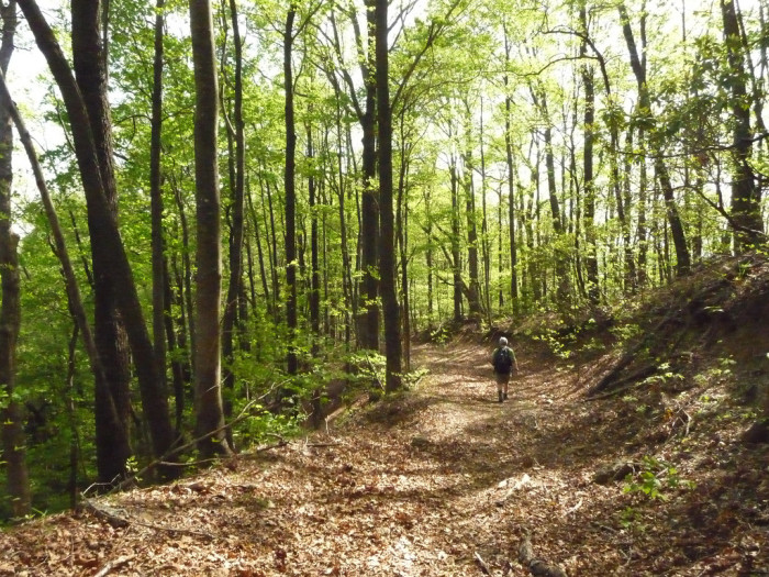11. If you live in a small town then a walk in the woods is always nearby.