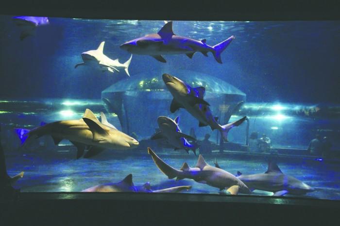 12. Visit the Oklahoma Aquarium.