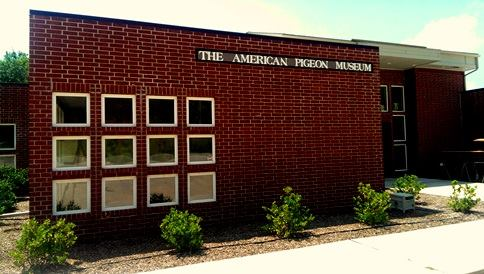 11. The American Pigeon Museum: Oklahoma City