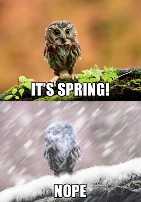 7. Just when we think spring has arrived in Oklahoma, we get blasted with a blizzard.