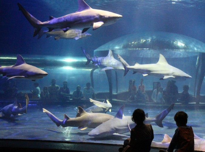 9. Visit the Oklahoma Aquarium in Jenks and sleep with the sharks.
