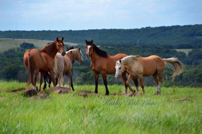 1. These wild horses in Osage County are gorgeous. The terrain in northeastern Oklahoma is ideal for wild horses due to its adequate water supply, native grasses high in protein and the rocky terrain that helps to naturally trim the horse's hooves.