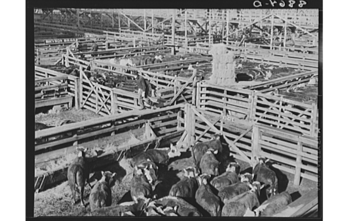 13. The South Omaha Stockyards in 1938.