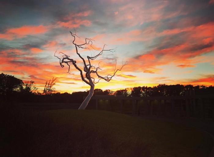 9. Dead Silver Tree