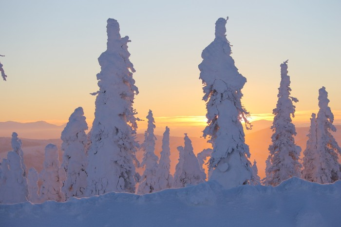 11. The sun setting behind a snow covered boreal forest.