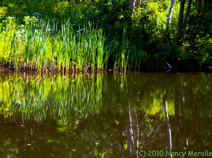 9.  The Pond Less Traveled in Ripton