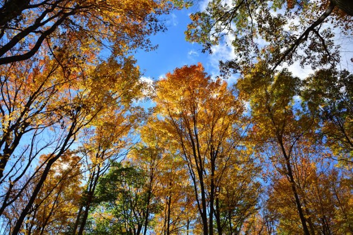 1. Fall colors in Hogback Ridge Park in Madison, OH