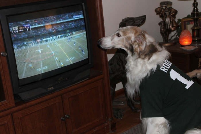 7. We watched TV as a family - even the dog wanted to watch.  (Please don't ask me why he's rooting for that team...I have no idea.)