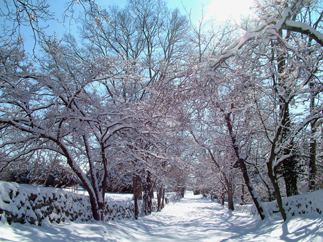 """16. But what we think the most during a Virginia winter is, """"Wow."""" And for good reason."""
