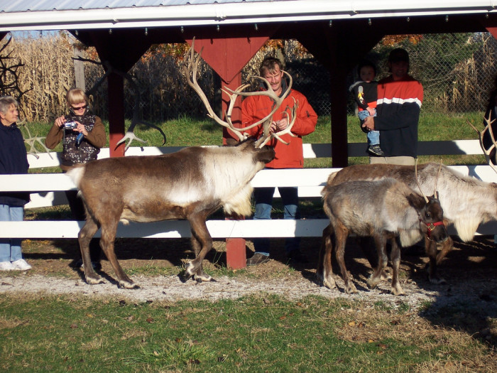 9.	Vermont Reindeer Farm – West Charlston, VT.
