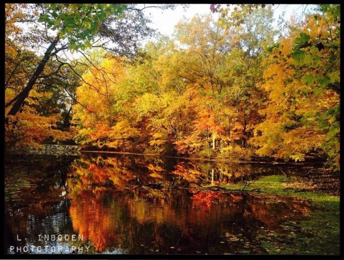 12. We love how pretty the trees look in the water in this shot taken at Crawford County Forest.