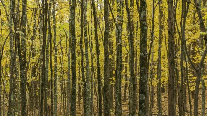 10. Ferne Clyffe State Park