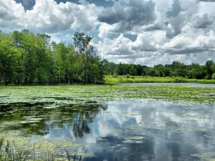 11. Timber Lake Forest Preserve