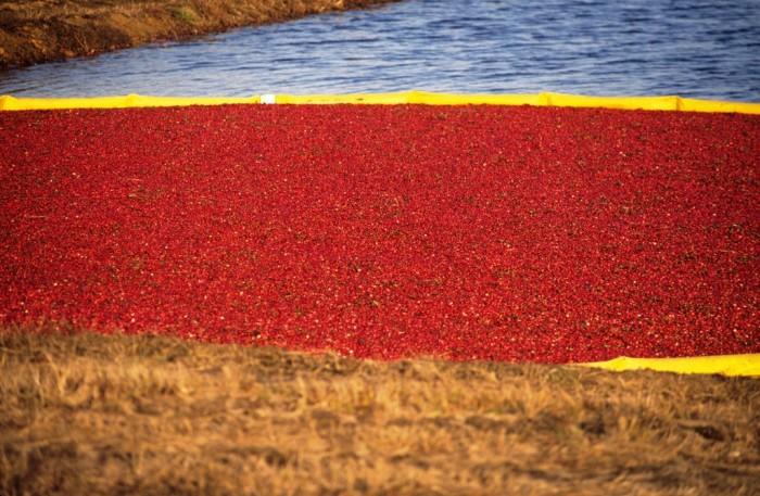 16. Visit a cranberry bog
