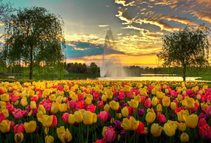 20. Chicago Botanic Garden