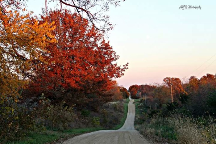 5. Who doesn't want to travel down this country road in Milledgeville, IL?