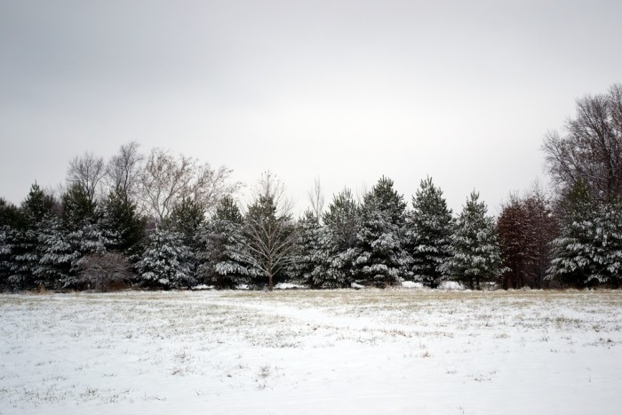 7. Is there no better time to go pick out a Christmas tree than when there is a light covering of snow?