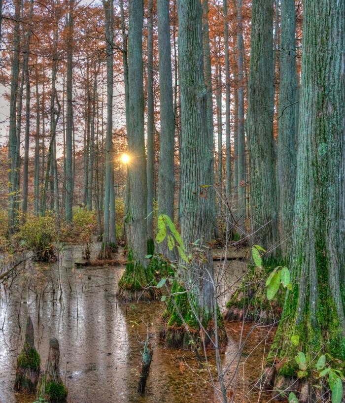 10. Gorgeous Trees