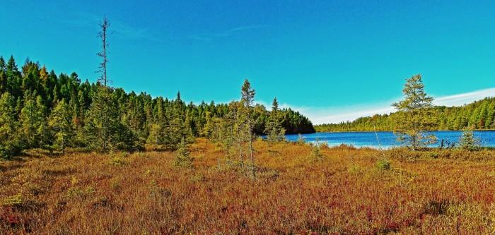 5. Kissick Alkaline Bog Lake State Natural Area