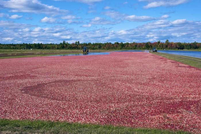 6. Cranberry Bogs
