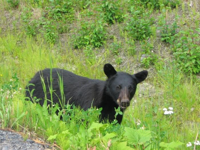 1. Bears