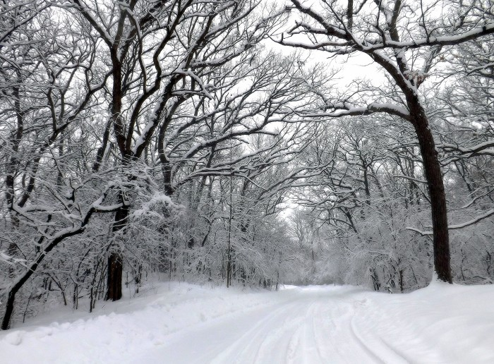 8. Snow can point us in the direction of the path less traveled.