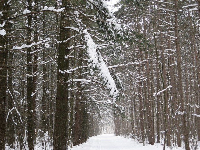 4. It makes you stop and look at a tree-lined path.