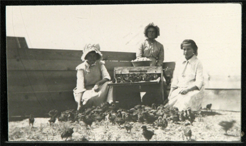 "14. ""Women and Baby Chicks on Keota Farm."""