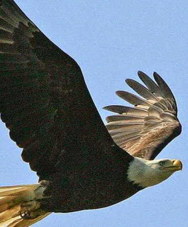 1.Eagle Watch at Roaring River State Park.