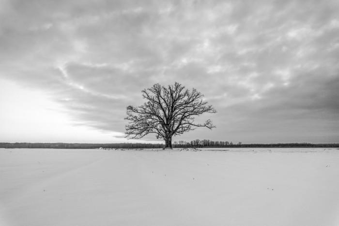 1.Oak Tree, Plains