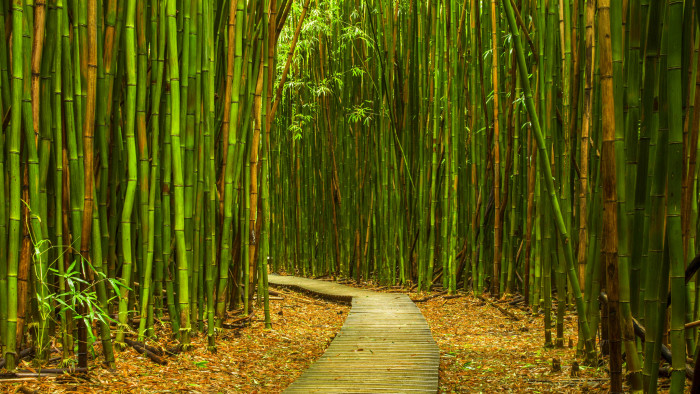 10) Bamboo Forest
