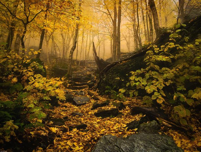 10.Foggy path in Vermont