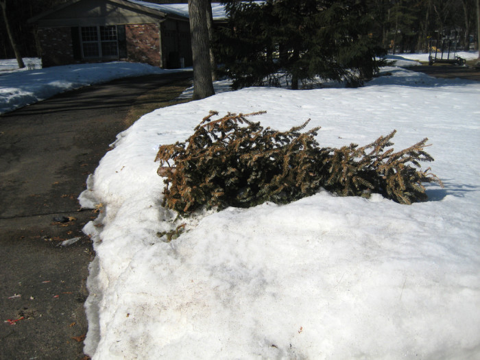 10.Your Christmas wreath and tree froze in a snow bank.