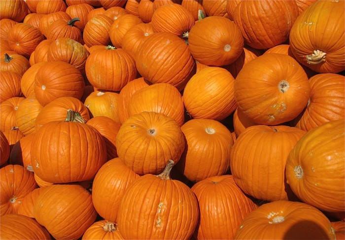 5. A rouge pumpkin rolled down the streets of Peoria.