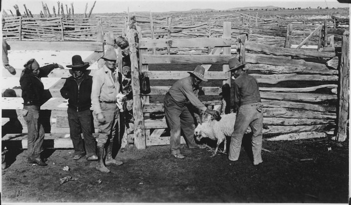 6. This photo shows a sale of some sheep in 1933 for relief efforts.