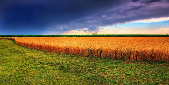 1024px-Kansas_Summer_Wheat_and_Storm_Panorama