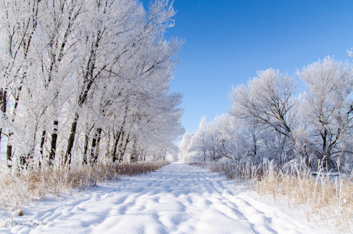 8. Boyden Recreation Area in Sioux City is a sparkling winter wonderland after the snow.